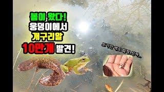 산에서 발견한 10만개의 개구리알.....?대박..날씨힐링.. [정브르]/Frog egg sac in spring