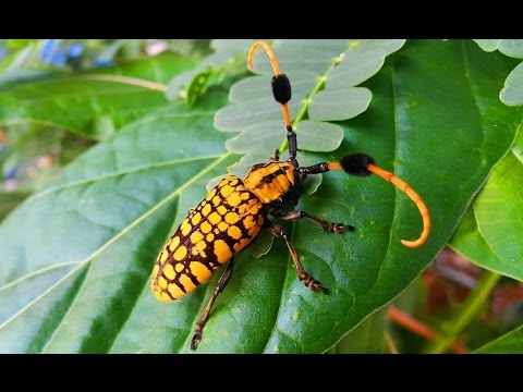 Amazing Insect color Yellow, most beautiful Bug, Artistic ...
