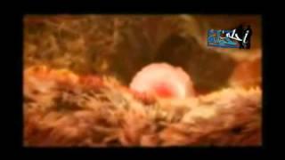 فيديو رائع لمراحل تكوين الجنين داخل رحم الأم