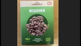 Домашняя Грибница Вешенки Купить Брянск