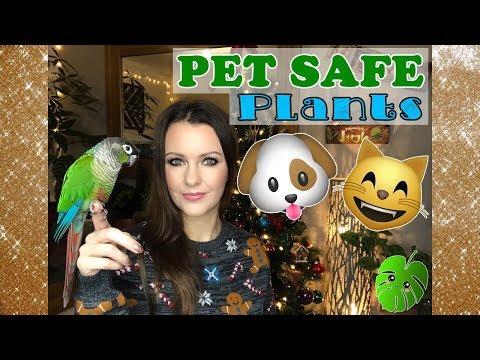 Pet Safe Houseplants! 🌿😺🐶🐥❤️