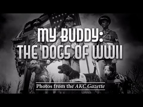 My Buddy: The Dogs of WWII