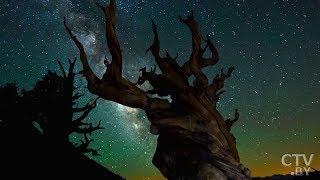 Звездопад Дракониды можно будет увидеть в ночь на 9 октября