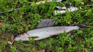 Рыбалка на хариуса под водопадом и на спокойной воде.