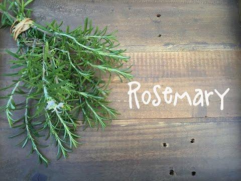 How to Grow Rosemary | IN BETH'S GARDEN