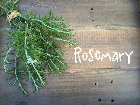 How to Grow Rosemary | IN BETH'S GARDEN