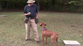Retrieving To Hand - Positive Reinforcement Training - Jake (vizsla)