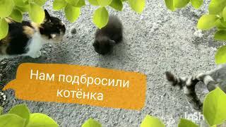 Бросили котёнка