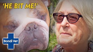 Rescued British Bulldog Attacks New Owner | Full Episode | Bondi Vet