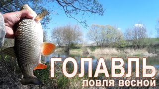 Отличная рыбалка на голавля! Секреты ловли голавля весной / ГОЛАВЛЬ НА СПИННИНГ