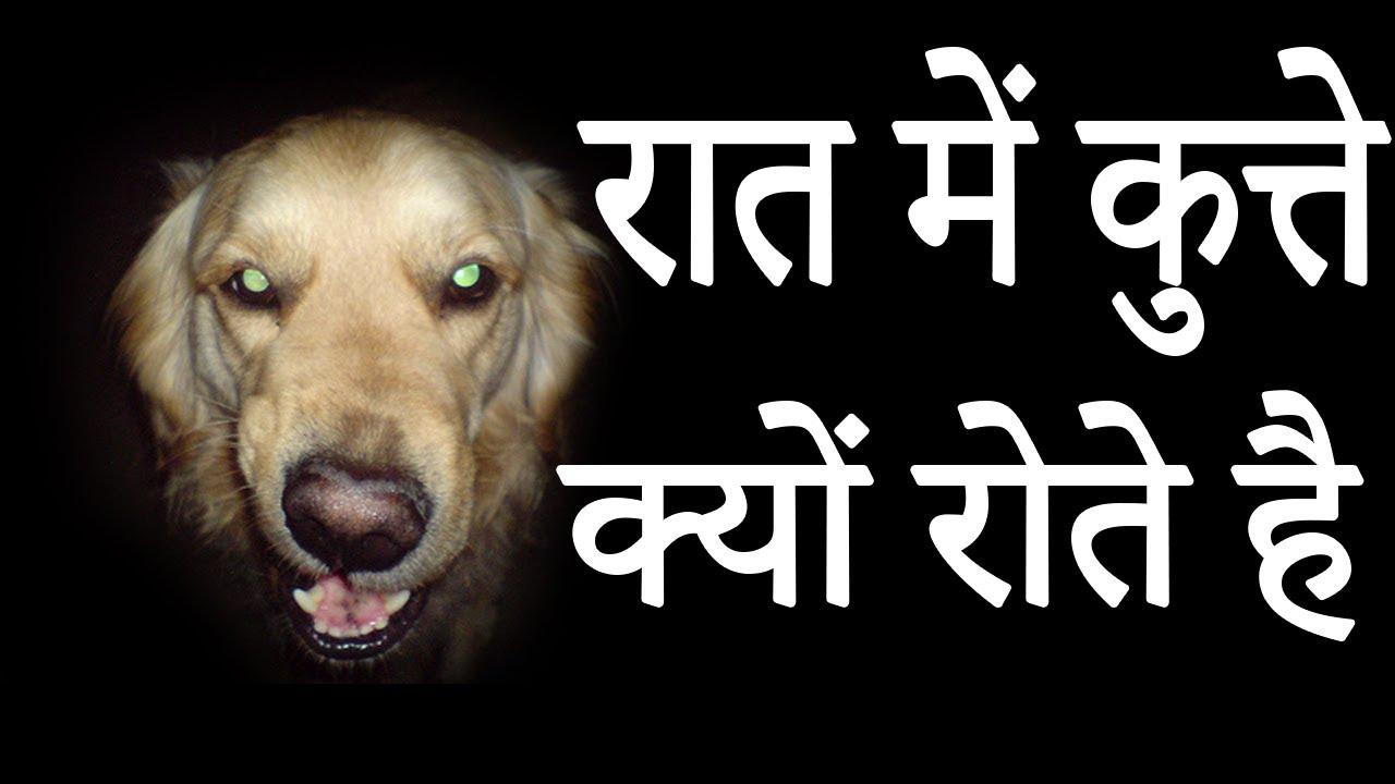 रात में कुत्ते क्यों रोते है || Why do Dogs Cry During the Night|| - YouTube