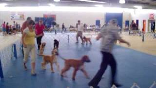Puppy Dog Class At Ukc Show On 072708