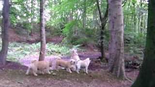Daisy The Cairn Terrier!