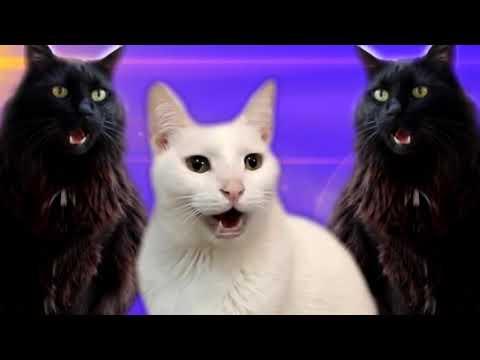 Cats Sing BINGO |  Nursery Rhymes - Cats Version
