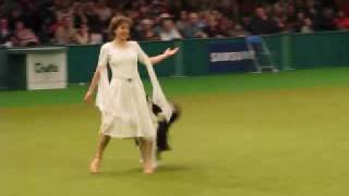 Cruft's  Dog Dancing Competition 2009