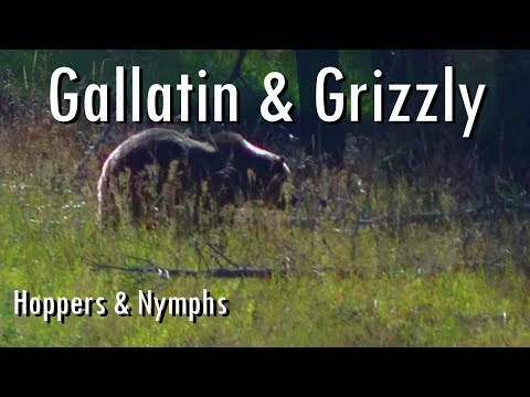 WBD - Fly Fishing Yellowstone & Montana  Gallatin & Grizzly