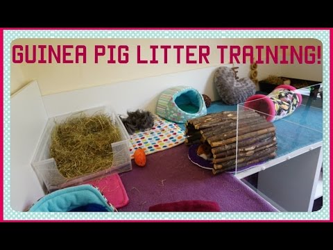 NEW: 6 Top Tips for a Clean Cage and Litter Trained Guinea Pigs! | Squeak Dreams