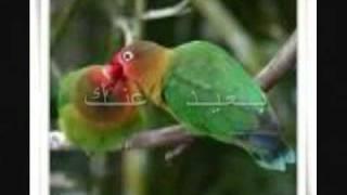 بعيد عنك شيماء الشايب ba3eed 3nak shayma al shayep