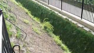 видео святая канавка в дивеево