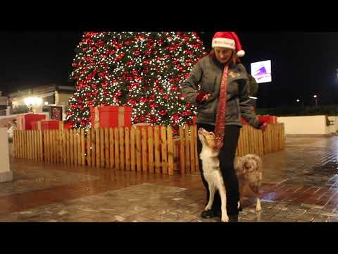 Dog dancing - Jingle Bells Rock (Glee version)
