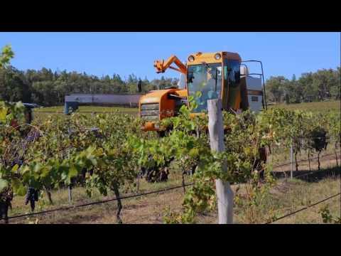 Sirromet Wines Harvest 2016