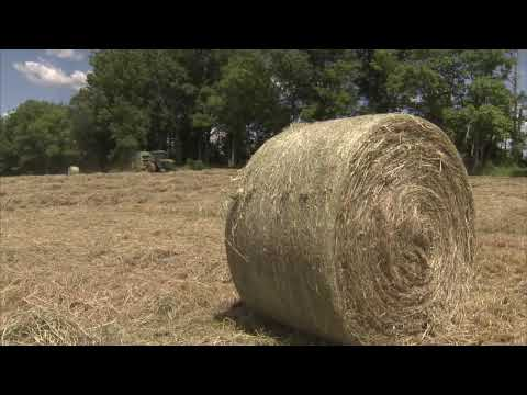 Growing Hay for the Cattle - America's Heartland