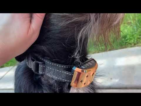 d-collar-[no]-dog-bark-collar-—-water-resistant-dog-training-collar—-usb-rechargeable-and-led-light!