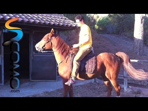 cómo-subir-al-caballo