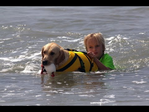 Cori's Canine-assisted swimming for kids with special needs.