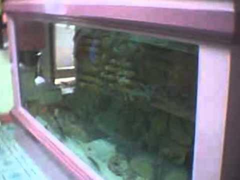 3 x 7 ft diy aquarium youtube for Construction aquarium