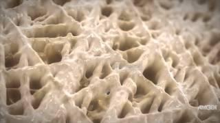 Le remodelage osseux modif