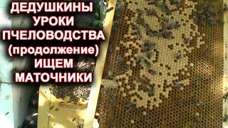 Дедушкины уроки пчеловодства (продолжение) Ищем маточники.