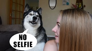 Arguing With My Husky About Taking A Selfie