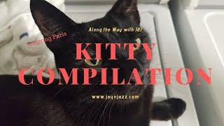 🐈Kitty Compilation - Featuring Paris - Cute Cat - Meow🐱