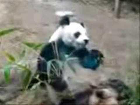 """Hong Kong Ocean Park Panda - """"An An"""""""