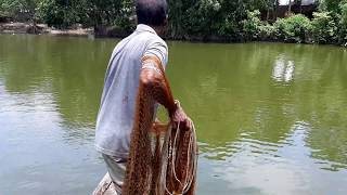 Best Cast Net Fishing।Big fish hunting by cast net।Net Fishing in the Village (part -58 )