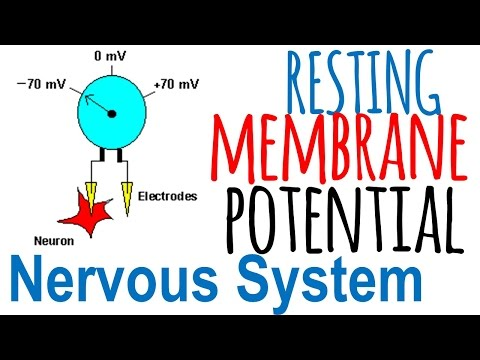 Resting membrane potential of a neuron
