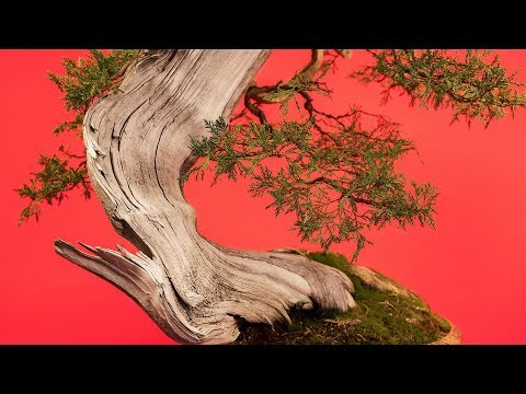 How to Wire a Bonsai