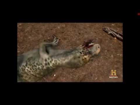 Allosaurus vs Ceratosaurus