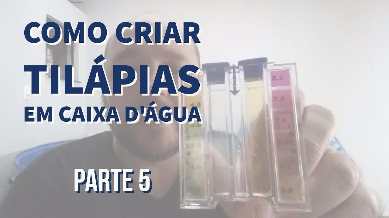 Medindo o cloro como criar til pias em caixa d 39 gua youtube for Como criar tilapias