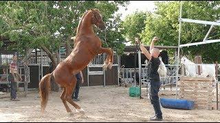 חוות הסוסים של עלי אשקר | בלנדר - הטלוויזיה של עכו