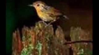 Uirapuru - Nilo Amaro e Seus Cantores de Ébano