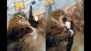 Cursed cats playing with C418  Cats