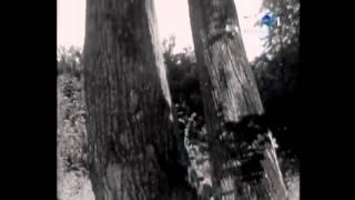 Ion Dolanescu - Codin