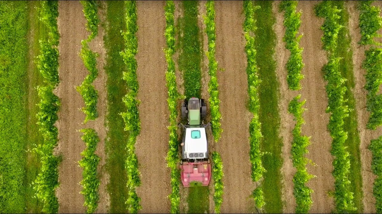 Vineyards Bordeaux | Vineyard in France for Sale | Bordeaux
