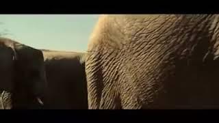 Hilarious Elephants sex Scene from hollywood movie😂