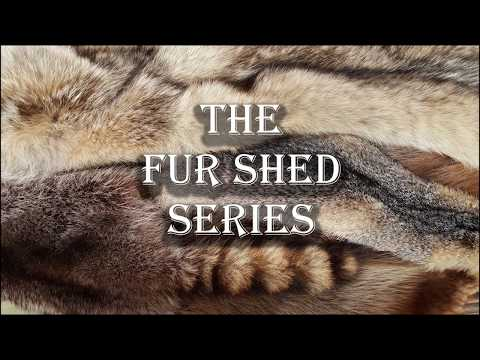 The Fur Shed Series - 1