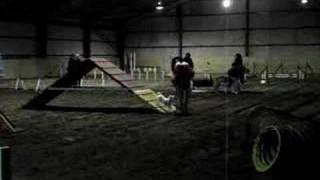 Minnie Jack Russell Agility Training