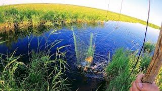 Рыбалка на паук в болотном ручье.