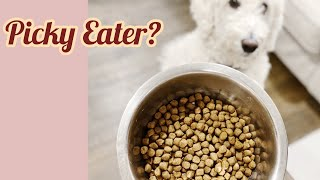 How To Get A Picky Dog To Eat Kibbles? I Did It In 4 Days!